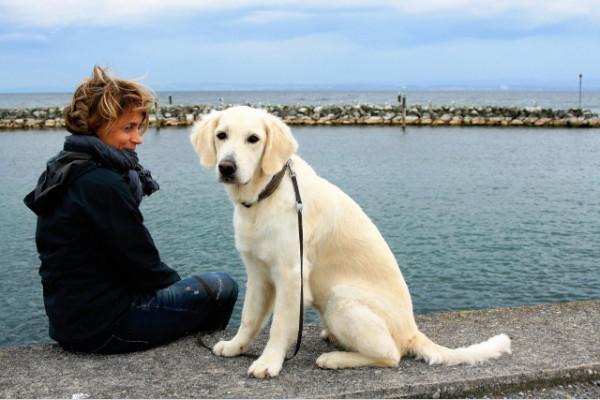Cách nuôi chó Golden một cách tốt nhất